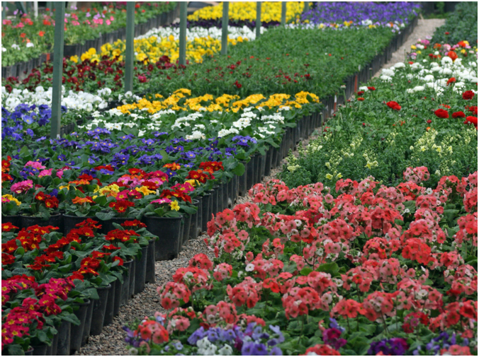 Wonderful Flowers Nursery Montgomery, Grimes, Walker Garden Information Find A Large  Selection At Our Flowers
