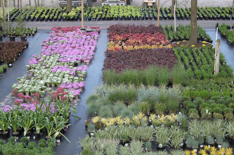 Perennial Nursery Montgomery, Grimes, Walker Visit our many locations with a large selection of perennial nursery
