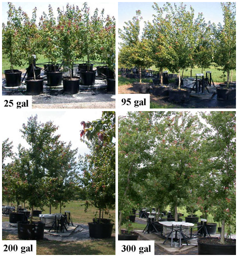 Evergreen Nursery Montgomery Grimes Walker Trees Selections