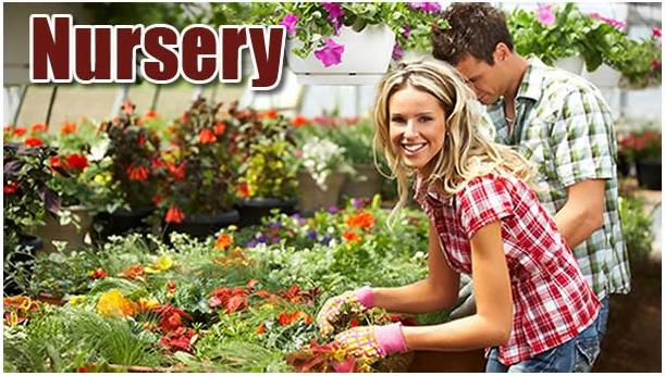 Flores Produce & Nursery - Montgomery, TX Garden Center Serving 3 Texas Counties – Grimes, Walker and Montgomery