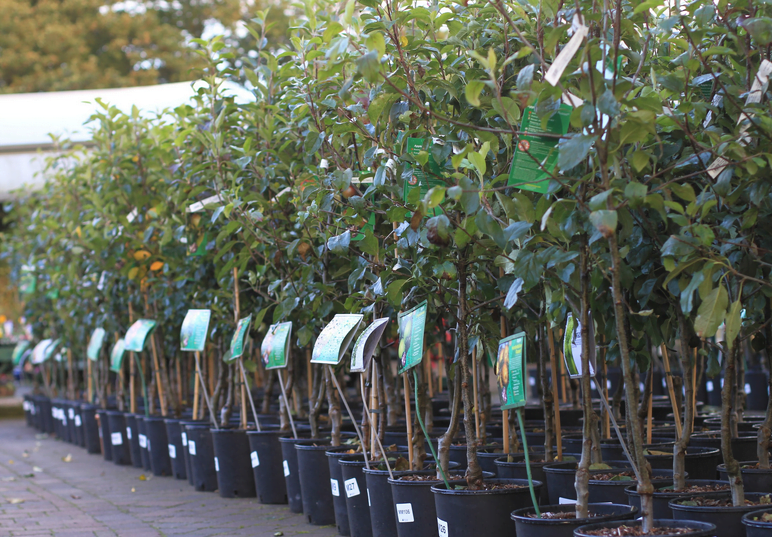 Tree Nursery Montgomery, Grimes, Walker Great Selection of Trees in Our Nurseries